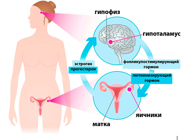 Гормональный фон женщины