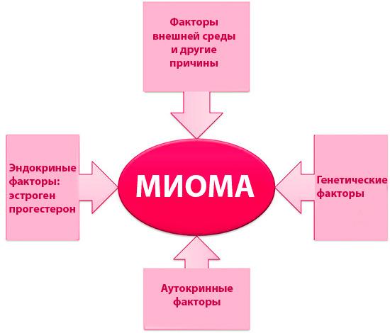 Этиология миомы