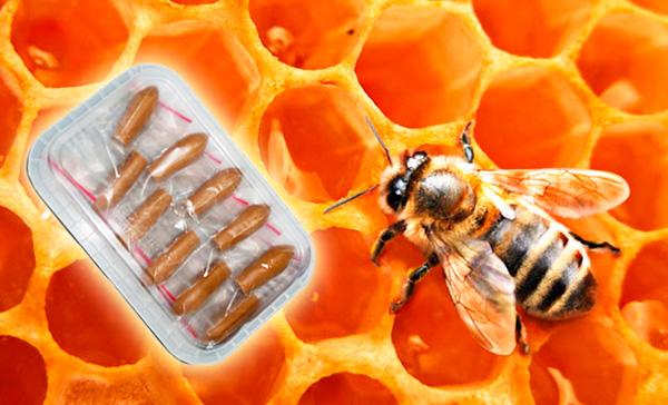 Продукты пчеловодства для лечения гинекологических заболеваний