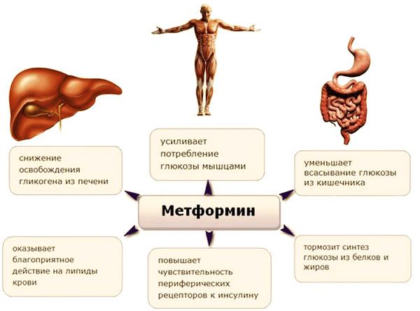 Влияние Метформина на организм