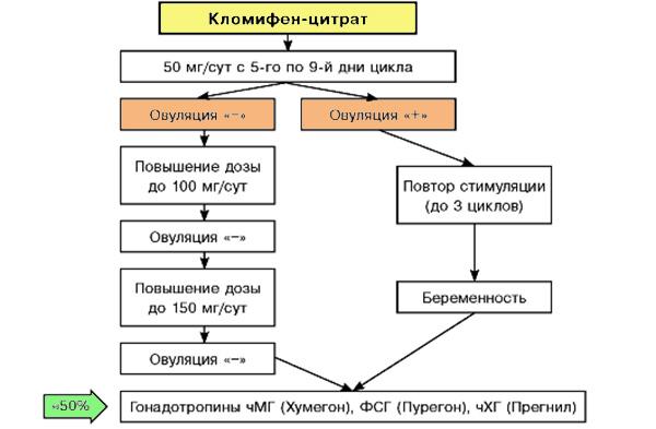 Стимуляция кломифен-цитратом (схема приема)