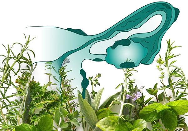 Выясняем, возможно ли вылечить эндометриоз травами...