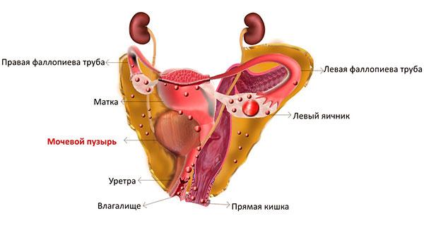 Экстрагенитальная форма эндометриоза