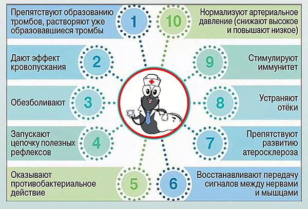 Схема результатов действия пиявки на организм