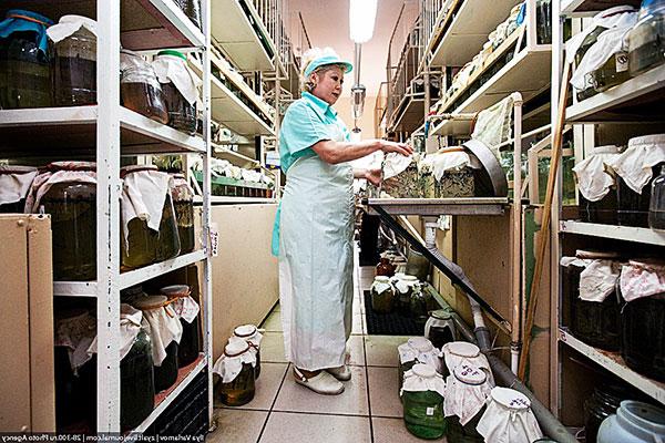 Выращивание медицинских пиявок в лаборатории