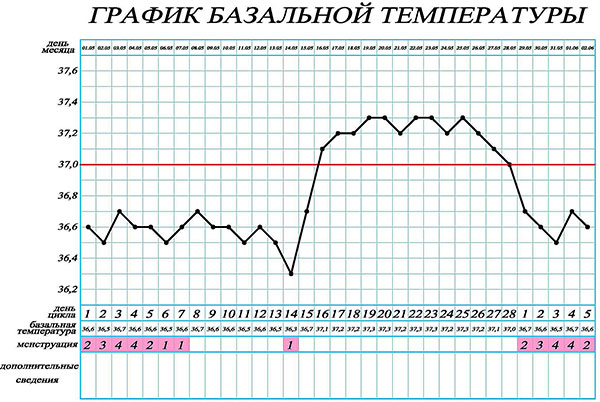 График базальной температуры (норма)