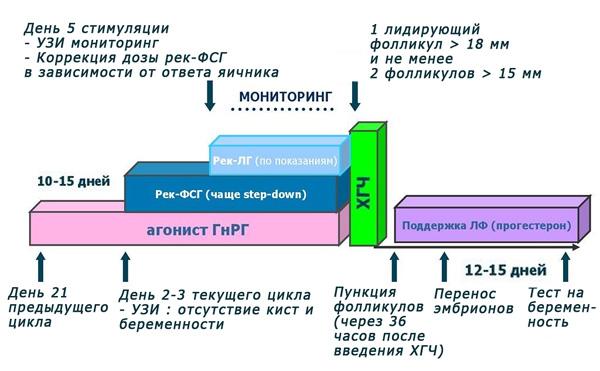 Длинный протокол ЭКО с использование агонистов ГнРГ