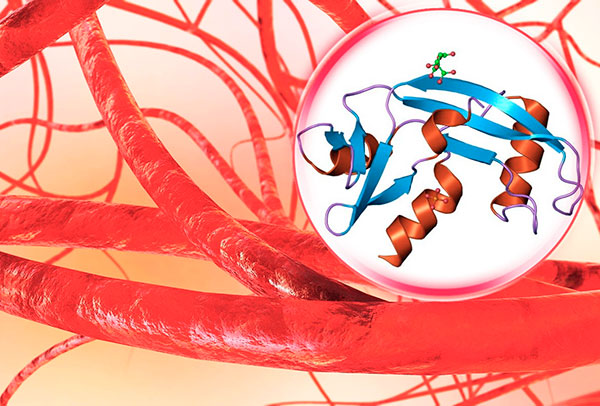 Роль ангиогенина в патогенезе эндометриоза