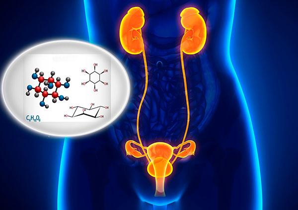 Мио-инозитол нормализует работу почек